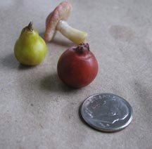 Goblin Fruit!